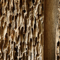 wood-pest