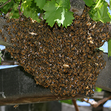 Bee_Control-10