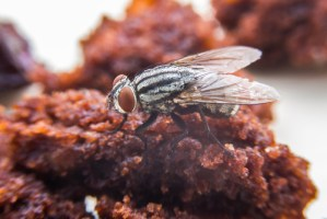 a fly sits on a piece of food