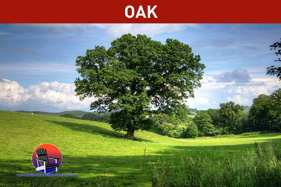 Oak tree for constructing adirondack chairs