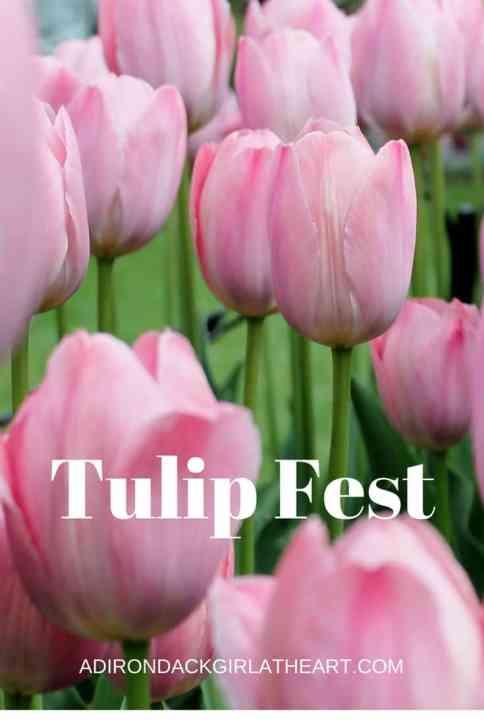 tulip fest albany ny adirondackgirlatheart.com