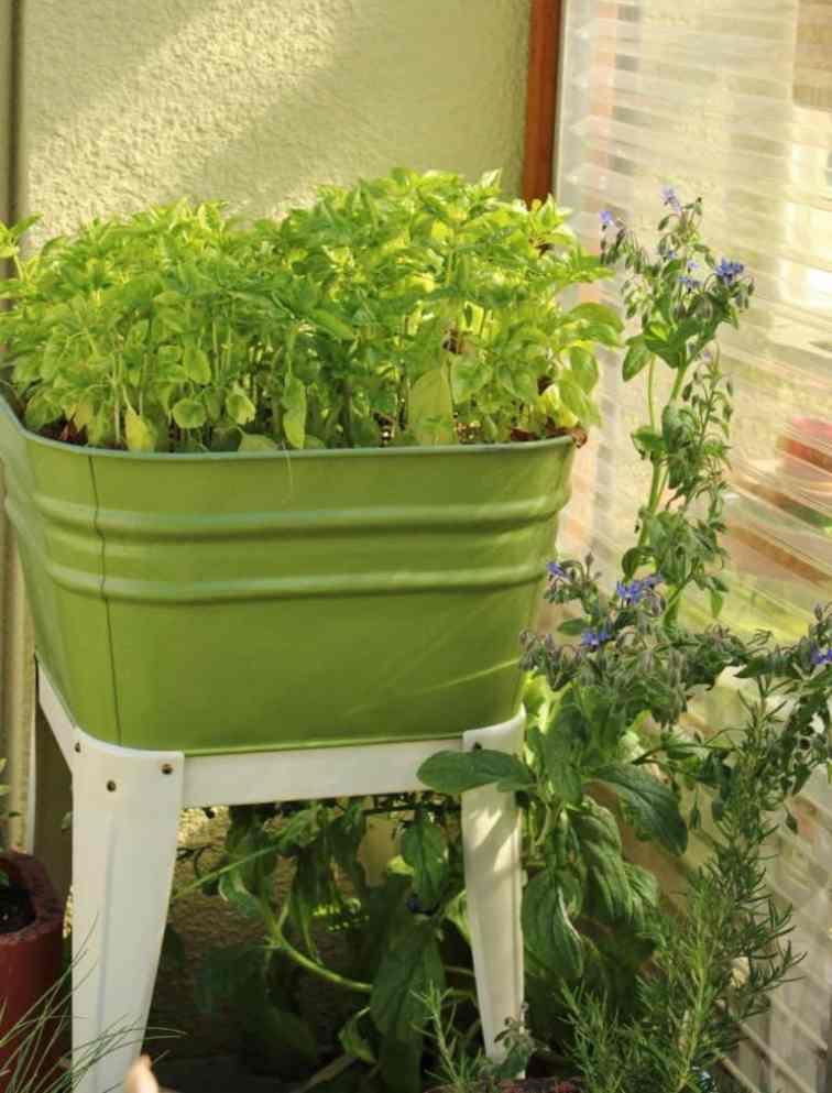 Flowers in galvanized tub