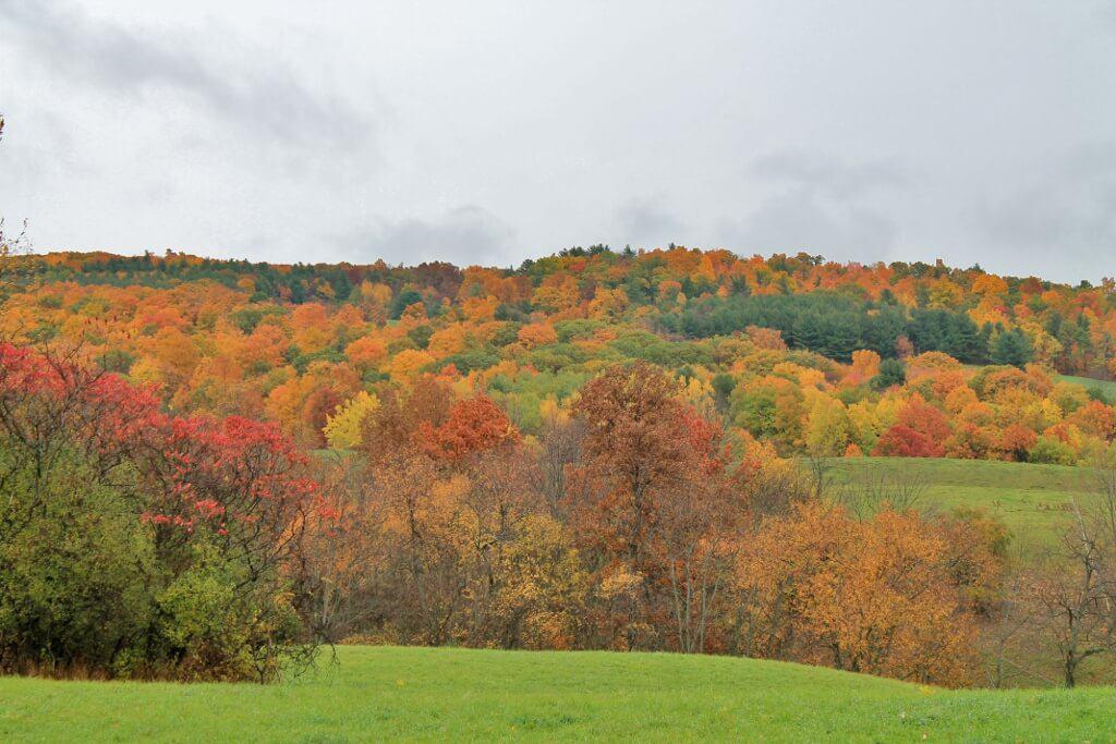 rensselaer-county-fall-folliage-1024x683