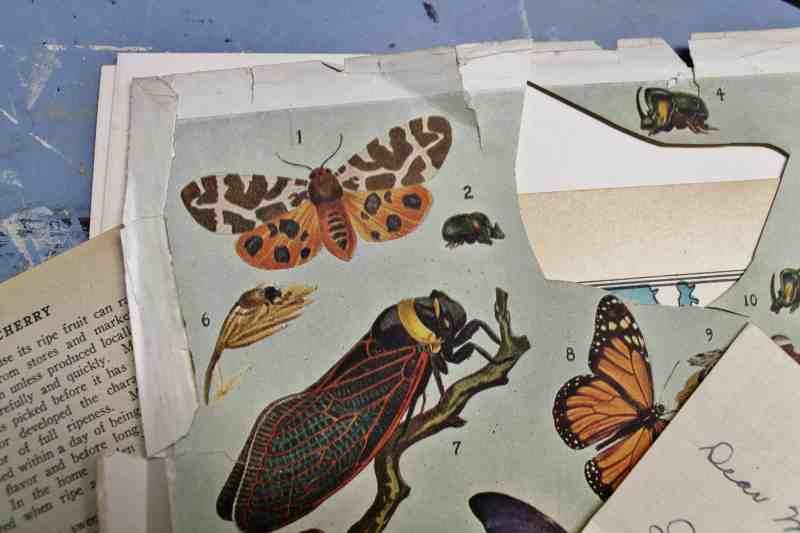 vintage butterfly prints