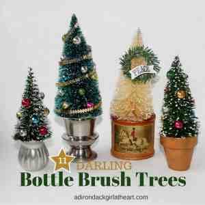 11 Darling Bottle Brush Trees