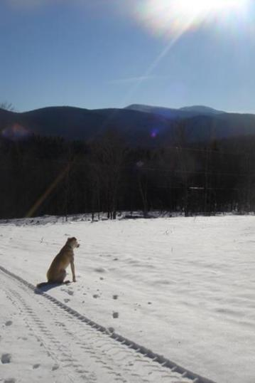 Sammy takes in the view.