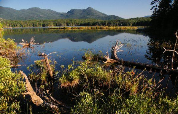 boreas-ponds-morning