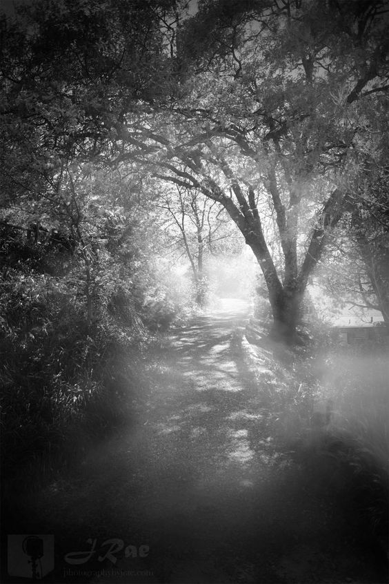 On the trail of silver mist