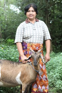 Sri kambing - Aditya Wardhana (8)