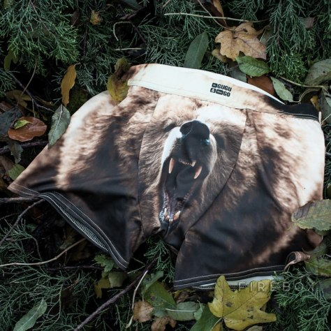 Grizzly Bear Underwear