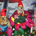 Garden Gnomes Halloween Costume Tutorial
