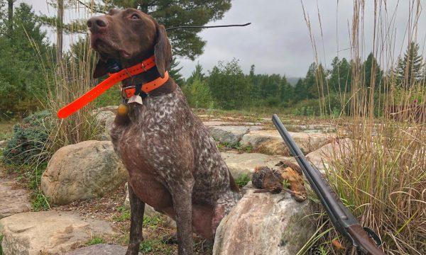 Adirondack-New-York-Bird Hunting-NY-25