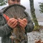new york grouse hunting