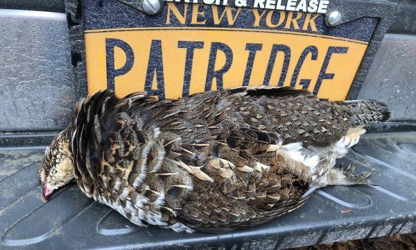 Grouse-Hunting-Adirondack-New-York-NY-5