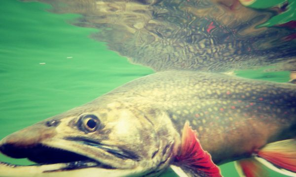 Trout-Brook-Fly-Fishing-Adirondack-New-York-NY-3