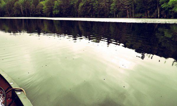Callibaetis_adirondack_ponds