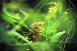 green squirreltn