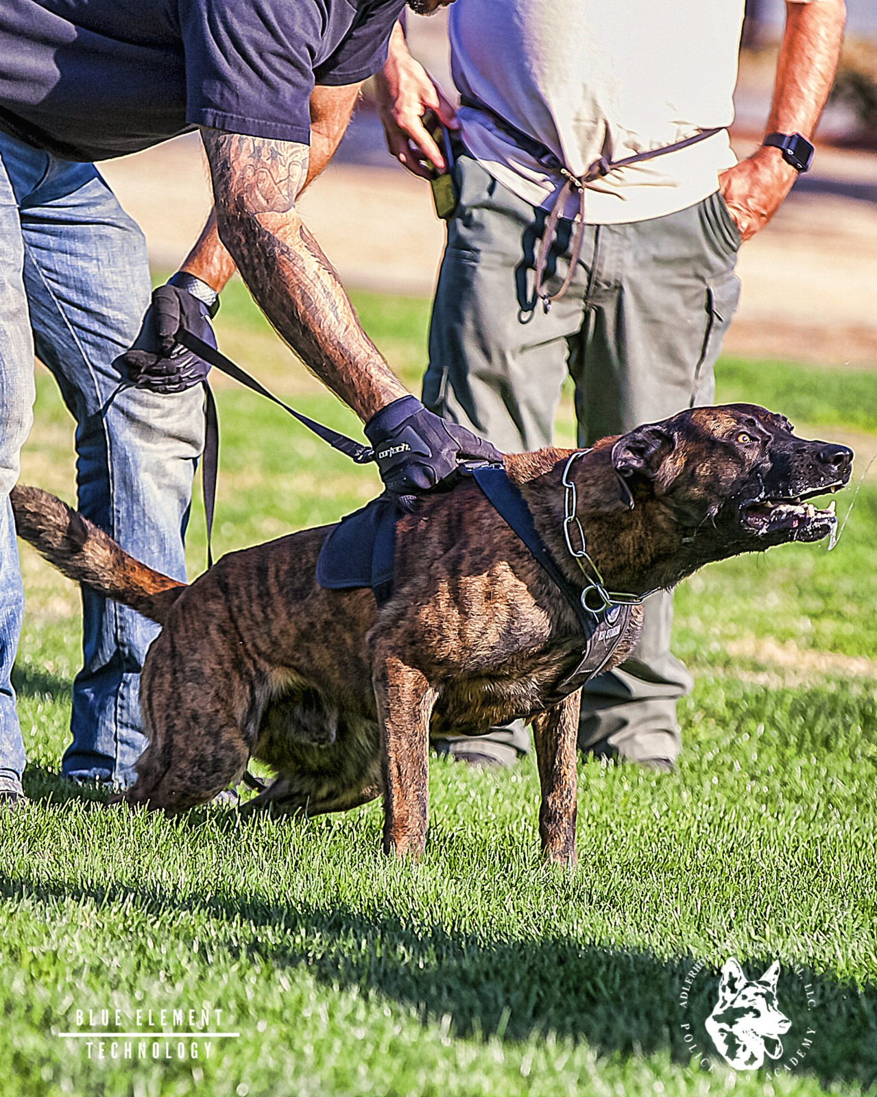 Police Service Dog Training