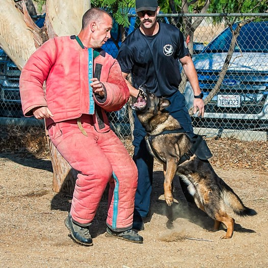 Basic Handlers Course
