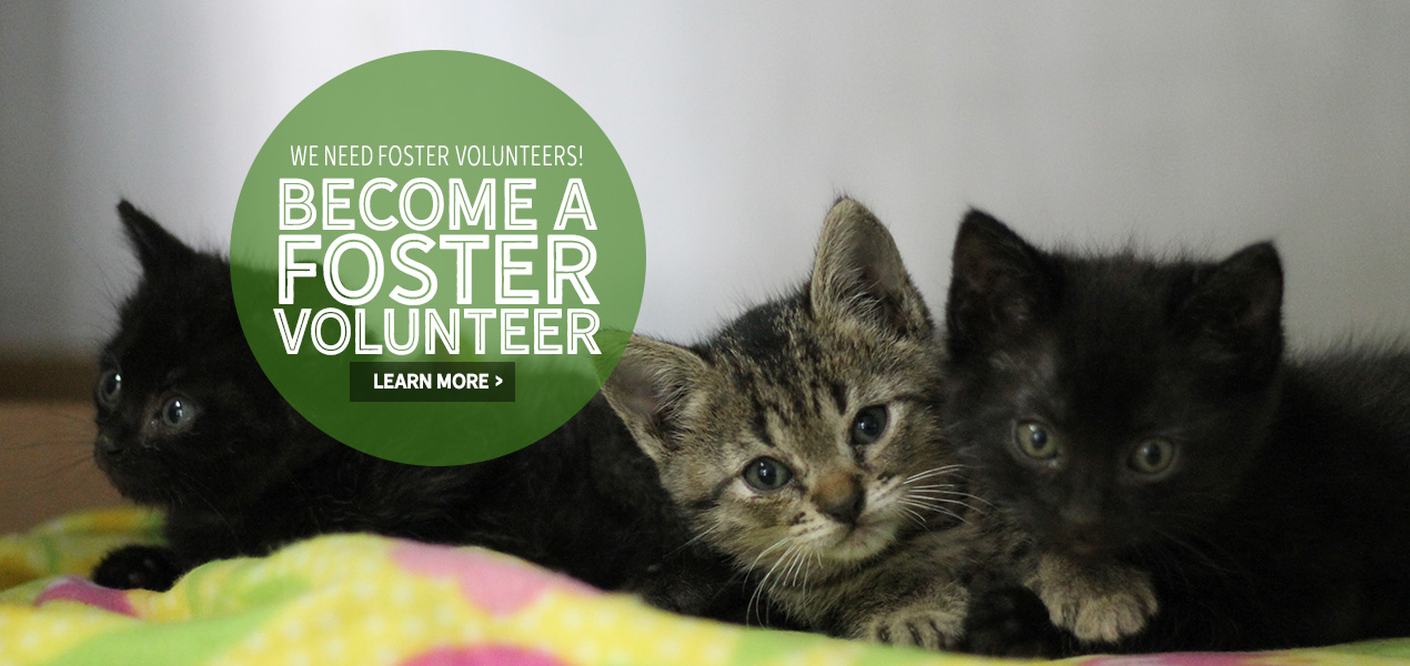 Foster cats and dogs from the Animal Defense League | San Antonio