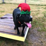 Bruiser - Elf hat