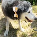 Adopt Hondo - Hurricane Harvey Dog