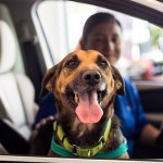 North Park Subaru Pet Star of the Week