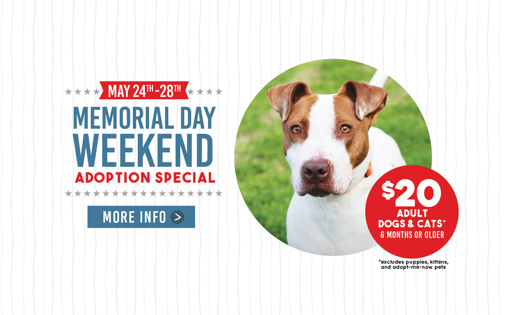 Memorial Day Weekend Adoption Special Animal Defense