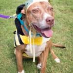 Adopt Marble - ADL Dog Queen Bee