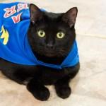 Adopt Thunder - Black Cat ADL
