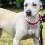 ADL - Adopt Carly - Terrier