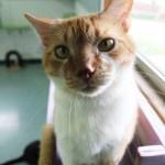 Adopt Dexter