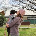 ADL - Adopt Eenie - Labrador Retriever