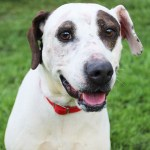 Adopt Isabel - Senior ADL dog