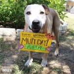 Adopt Imogen - Happy National Mutt Day
