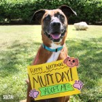 Adopt Soltai - Happy National Mutt Day