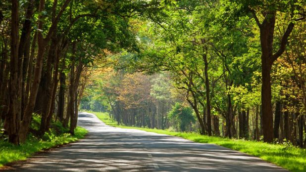 Image result for image of Bangalore to Bandipur Forest