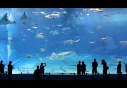 2nd largest aquarium in the world