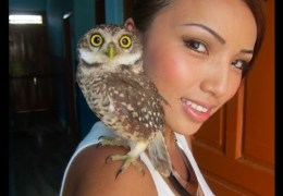 My pet owl 'Dumbo'