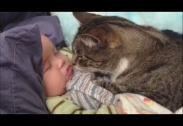 Cats Love Babies Compilation