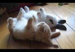 Funny Animals Playing Dead Compilation 2014