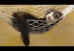 Best Funny Otters & Ferrets Compilation 2014