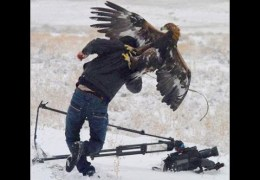 Top 7 Best Eagle Attacks (GRIZZLY,KANGAROO…& MAN)