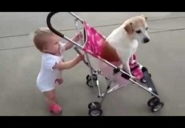 Babies and dogs take each other for a walk