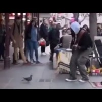Pigeon Dancing to Blurred Lines