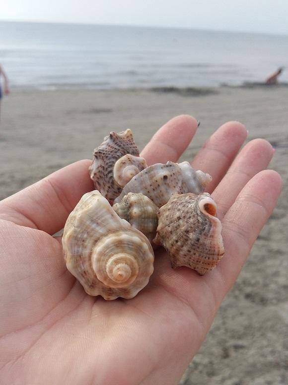 scoici culese de pe plaja