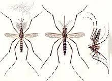 Alerta amarilla en el Valle del Cauca por dengue