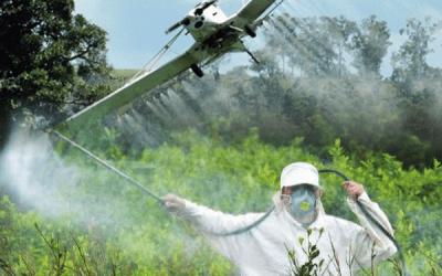 Colombia reanudará fumigación aérea contra cultivos de coca