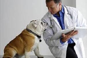 veterinarios