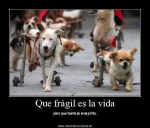 perros fragiles